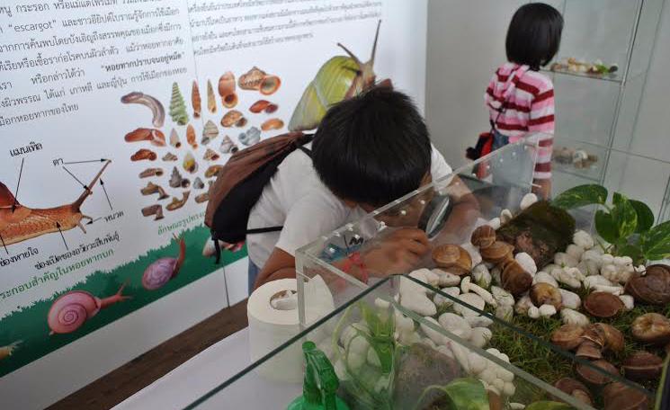 ข่าว จุฬาฯ เปิดตัวฟาร์มหอยทากเชิงนิเวศแห่งแรกของเอเชีย SiamSnail